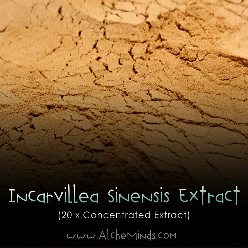 Incarvillea Sinensis - Herbal Pain, Insomnia, Anxiety Support
